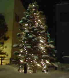 雪ってちゃんとクリスマスツリーのワタみたいに積もるんだね〜