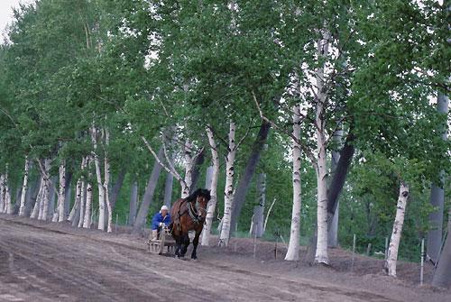 20060527-16.jpg