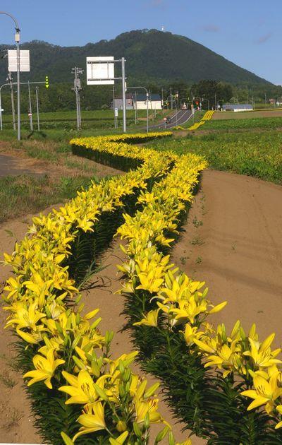 hurawa-ro-ro1.jpg
