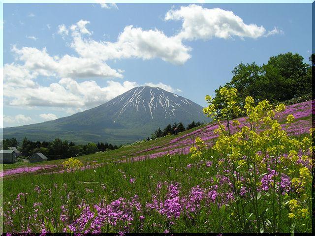 芝桜&羊蹄山1.jpg