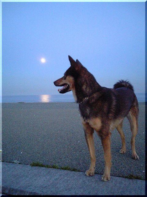 月明かり&りむ.jpg