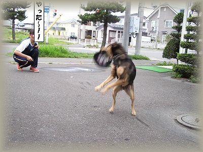 フリスビー犬3.jpg