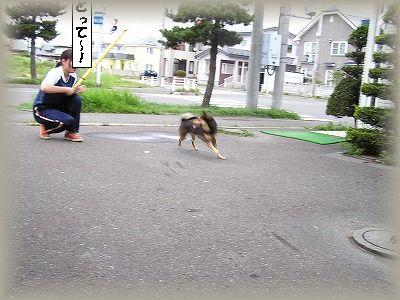 フリスビー犬.jpg