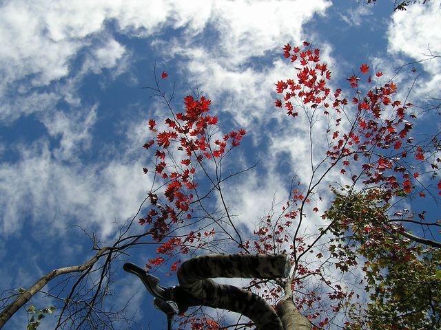 空&紅葉.jpg
