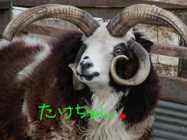 takechan.JPG