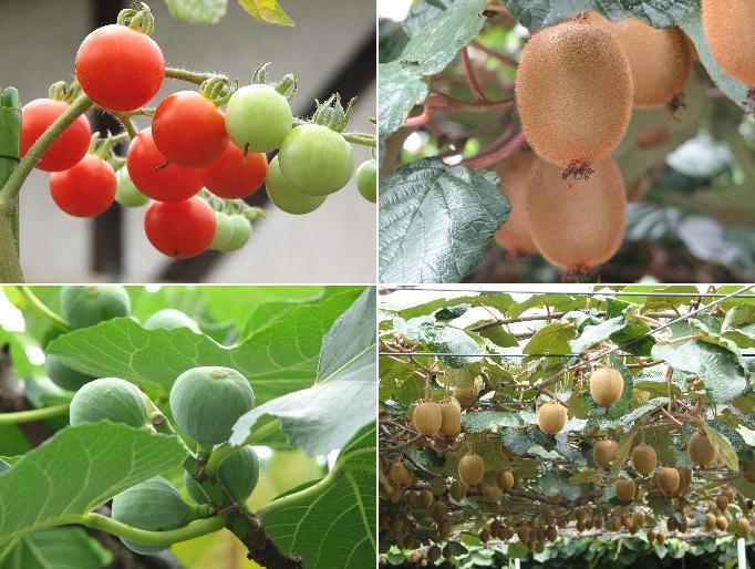 6fruits.JPG