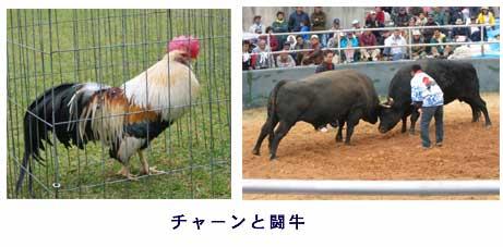 チャーンと闘牛.jpg