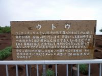 天売島のウミガラスの巣穴