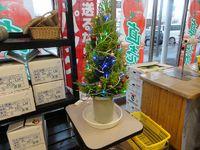 植木鉢のクリスマスツリー。