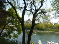 後楽園から見下ろす、岡山城