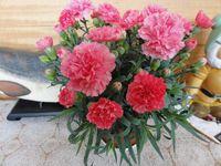 今の時期に売れる花。