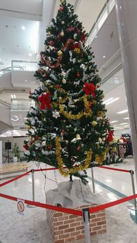 2017年のクリスマスツリー。