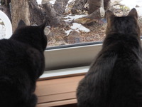 猫視線の先