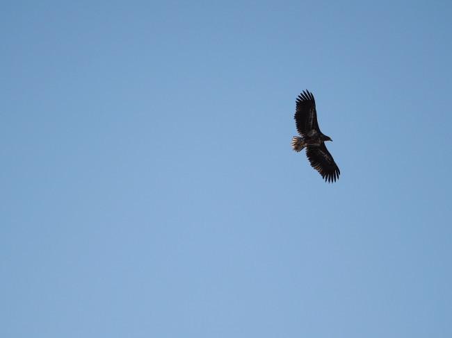 米町付近の越冬する鳥