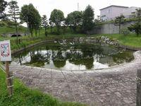 公園内の池3