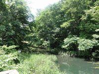勇舞公園敷地内にある沼地