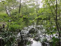 林東公園内敷地内にある沼地の光景。
