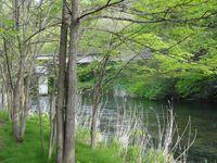 >林東公園付近を流れる千歳川