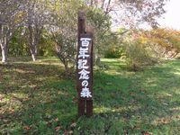 泉沢つつじヶ丘公園百年の記念の森の紅葉