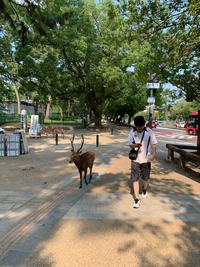 夏の奈良公園2019