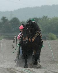 ばんえい記念2008出走馬 ナリタボブサップ