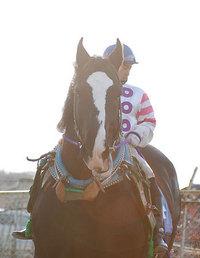 ばんえい記念2008出走馬 ヨコハマイサム
