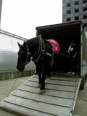 馬運車を降りるリッキー