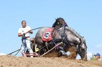 共和かかし祭 輓馬競技大会(16)
