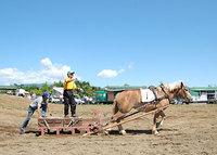 共和かかし祭 輓馬競技大会(13)