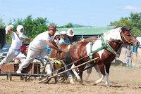 共和かかし祭 輓馬競技大会(14)