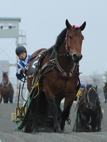 勝ち馬サクセスクィーン