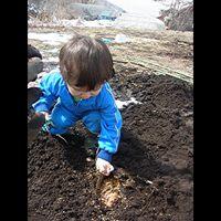 越冬にんじん掘り起こし