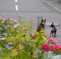 朝の花撮り散歩