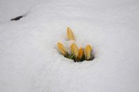 春がチョットだけ足踏み