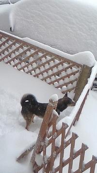 雪降って、ハイテンション!