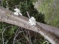 新緑と花の競演