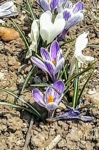 札幌にも春の兆し...花
