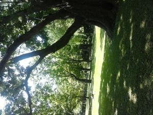 円山公園の木陰