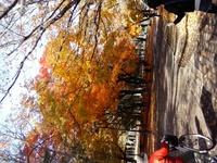 連日の秋晴れ、幌見峠越え真駒内へ山越えラン