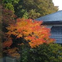 冬枯れ前の最後の紅葉の輝き