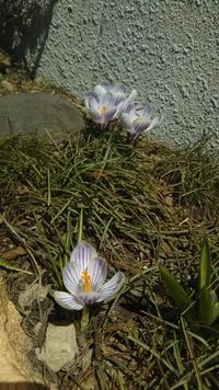 ようやく札幌にも本格的な春
