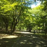 札幌久しぶりの青空、円山公園ラン