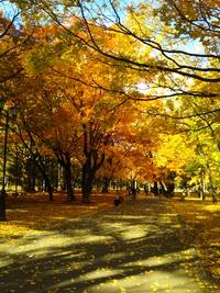 無事帰宅しました、円山公園ラン