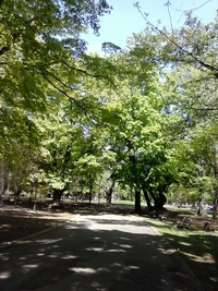 新緑を浴びてリハビリ歩行