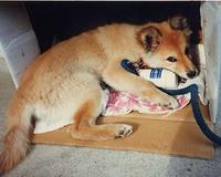 プキちゃん10年経ちました。