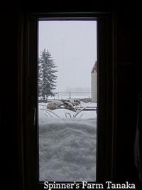 今日もまた雪・・・