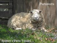 『羊毛まつり』開催します!②出店者のお知らせ