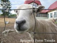 『羊毛まつり』開催します!④こどもむけコーナー