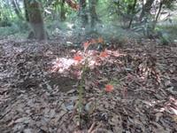 猛暑は早朝の森