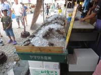 '16.8お盆その3 なかみなとお魚市場
